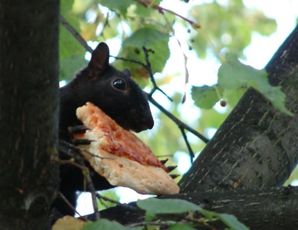 Eleni's Squirrel